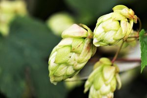 best-natural-remedies-for-anxiety-hop