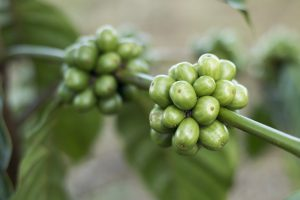 health-benefits-of-green-coffee