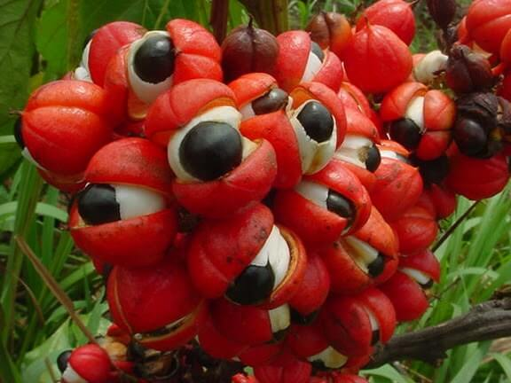 guarana-weight-loss-patches