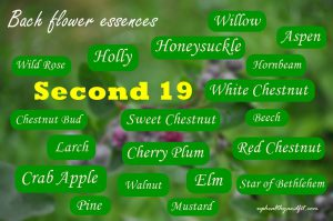 bach-flower-essences-second-19