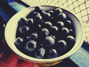 what-are-acai-berries