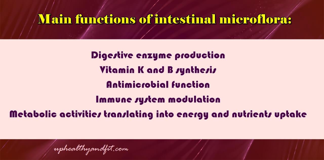 main-functions-of-intestinal-microflora