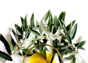 healthiest-oils-olive