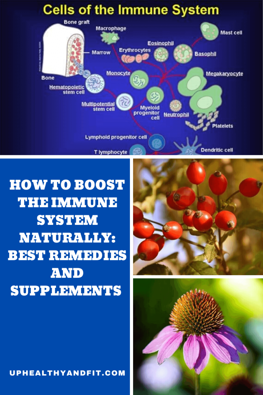 how-to-boost-the-immune-system