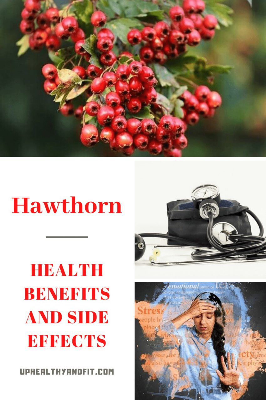 Hawthorn: Health Benefits and Side Effects